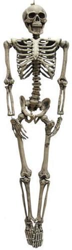 Skelet Deco 160cm