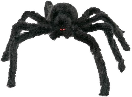 Zwarte Spin (60cm)