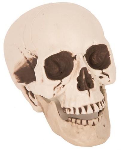 Deco Skull (25cm)